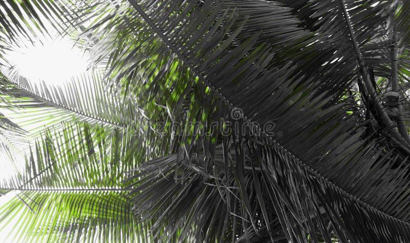 Palmblad - abstrakta naturliga Grey Background med handlag av gräsplan royaltyfri fotografi