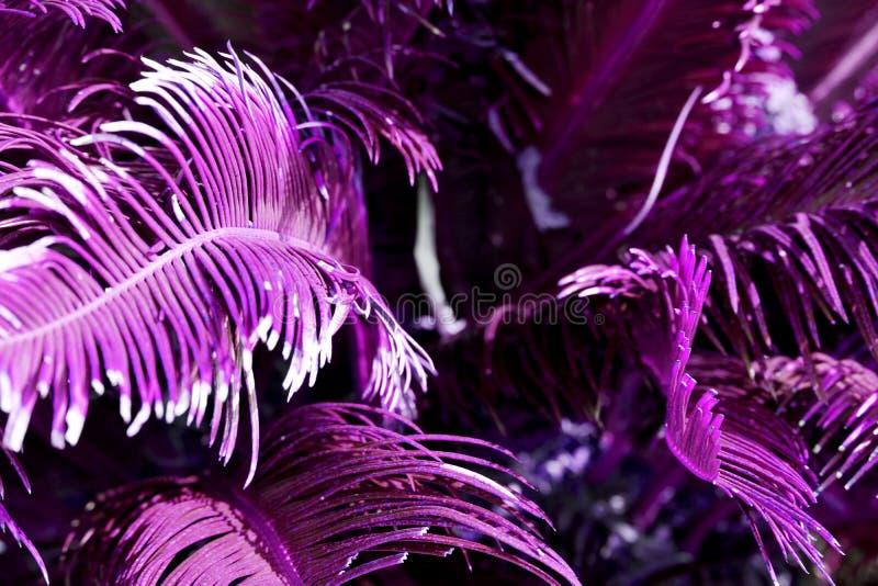 Palmblad av mörkt - gröna färger under solljus fotografering för bildbyråer