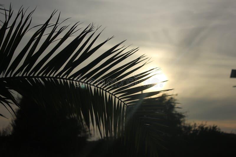 Palmblad bij de zonsondergang royalty-vrije stock afbeeldingen