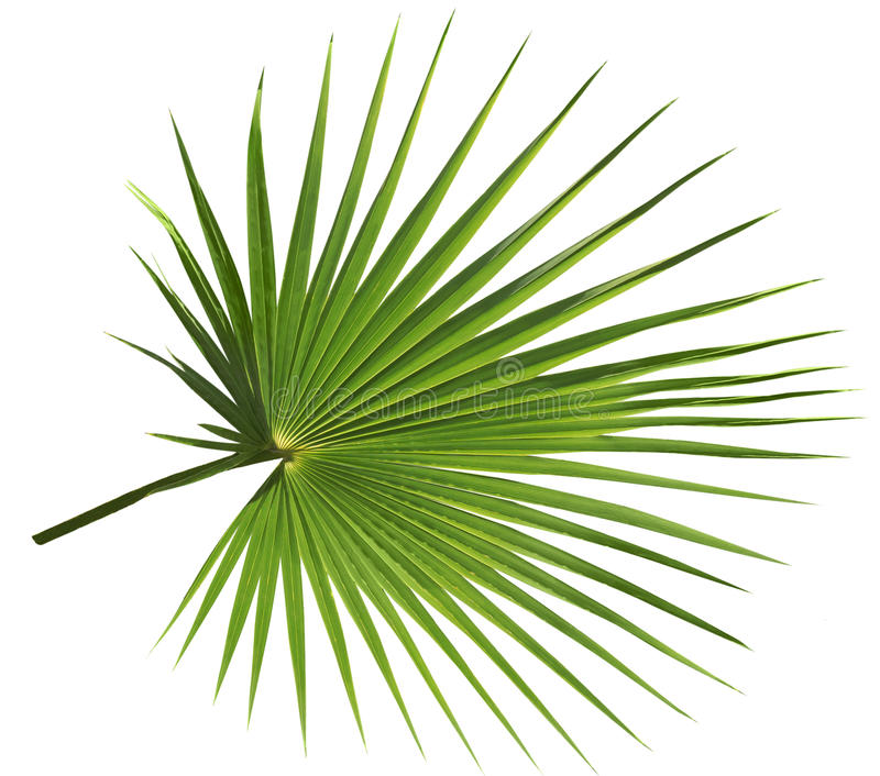 Palmblad dat op witte achtergrond wordt geïsoleerde royalty-vrije stock foto
