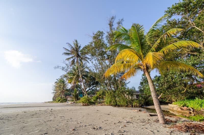 Palmblad en palmen royalty-vrije stock afbeeldingen