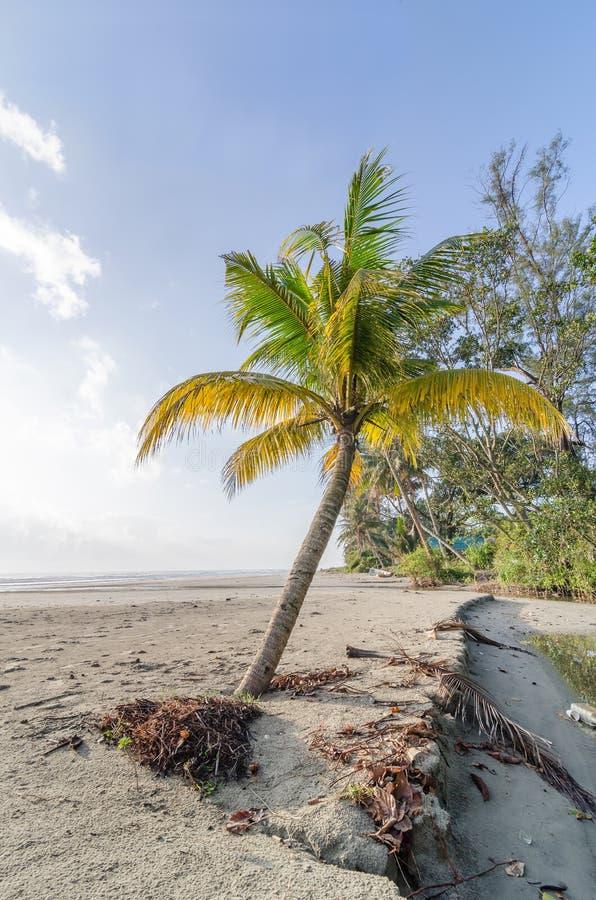 Palmblad en palmen op mooi strand stock afbeeldingen
