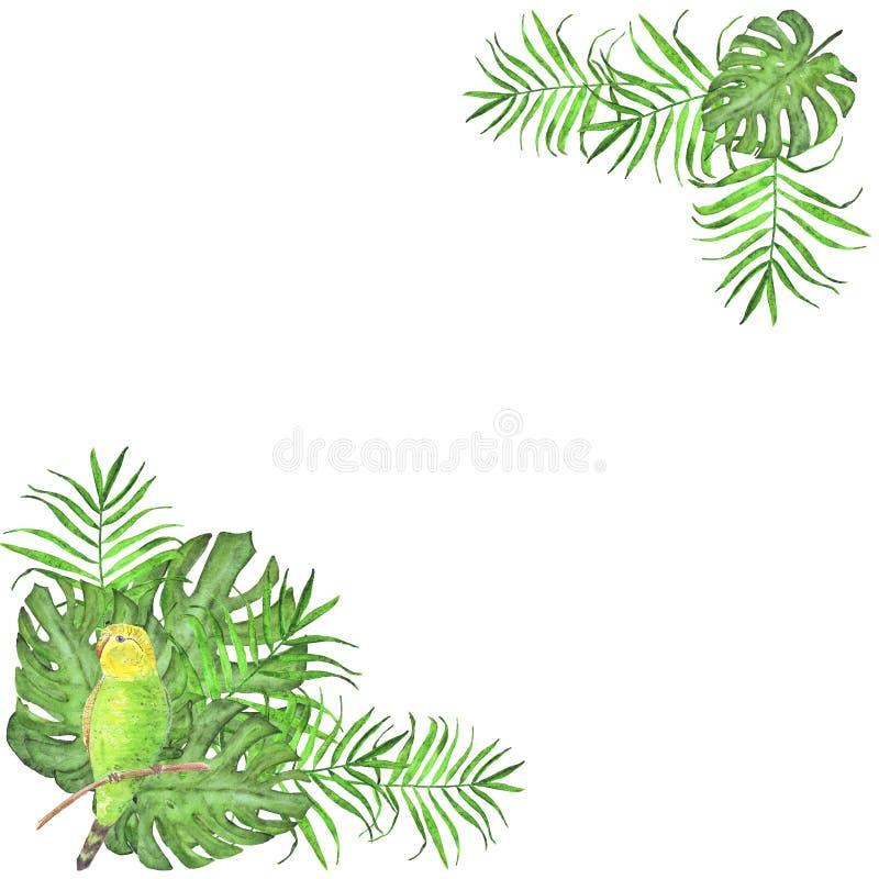 Palmblad för papegoja för vattenfärgram tropiska och monsterafågel royaltyfri illustrationer