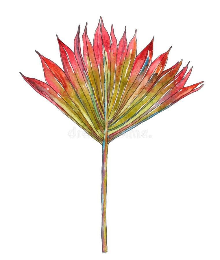 Palmblad för vektorvattenfärgmonstera stock illustrationer