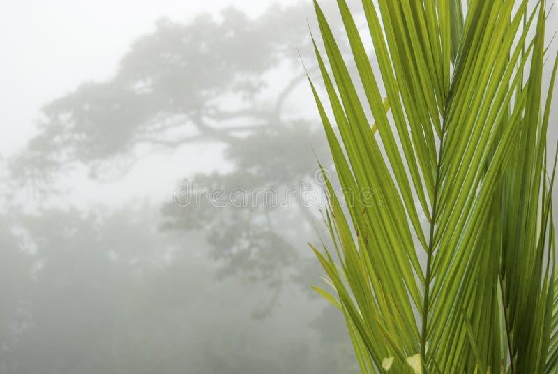 Palmblad i misten arkivfoton