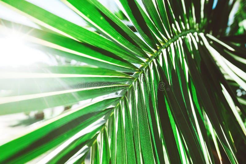 Palmblad med solljus royaltyfri fotografi