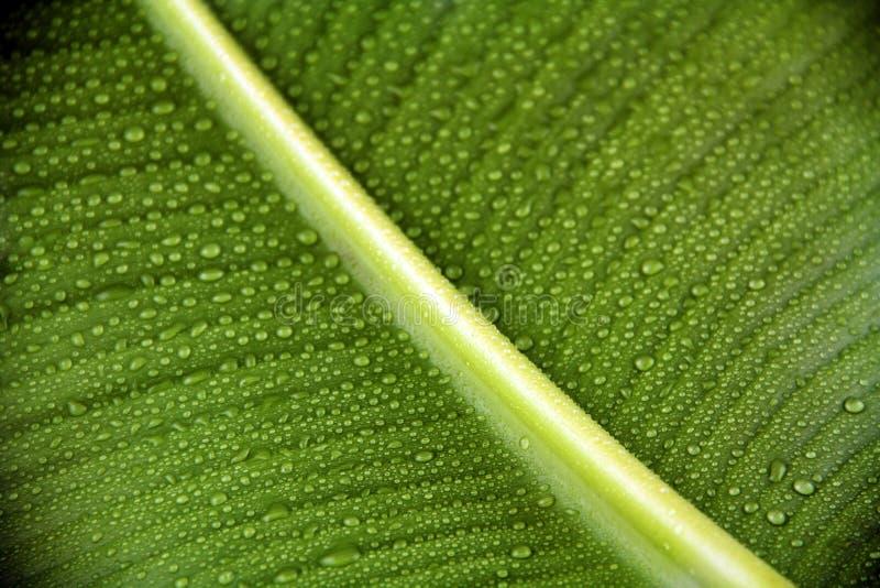 Palmblad met waterdalingen stock foto's