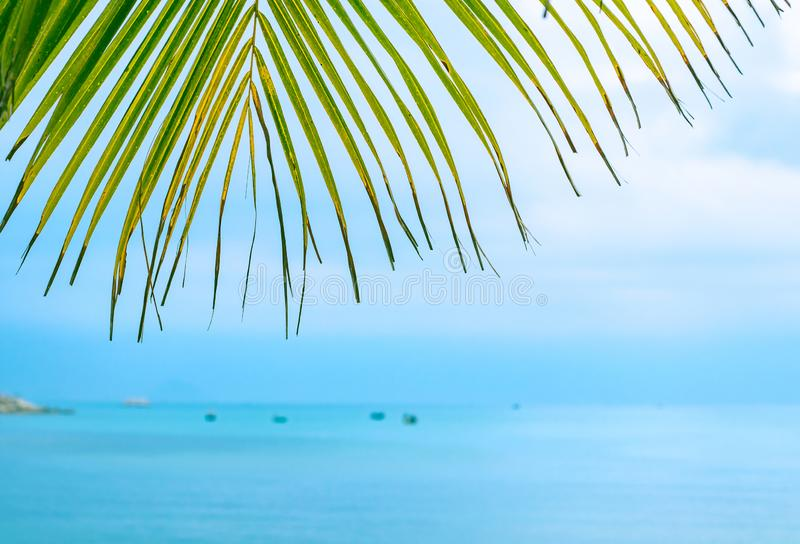 Palmblad mot havet royaltyfri bild