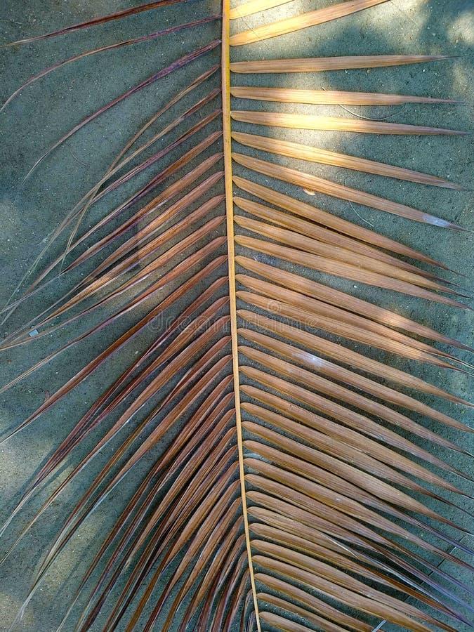 Palmblad op de grijze achtergrond royalty-vrije stock fotografie