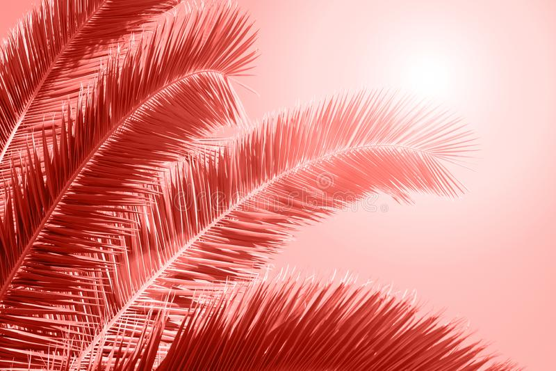 Palmblad op heldere achtergrond Het leven koraalkleur van het Jaar 2019 royalty-vrije stock fotografie