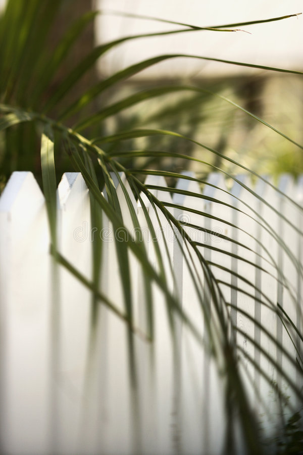 Palmblad over omheining op Kaal HoofdEiland, Noord-Carolina. stock afbeeldingen