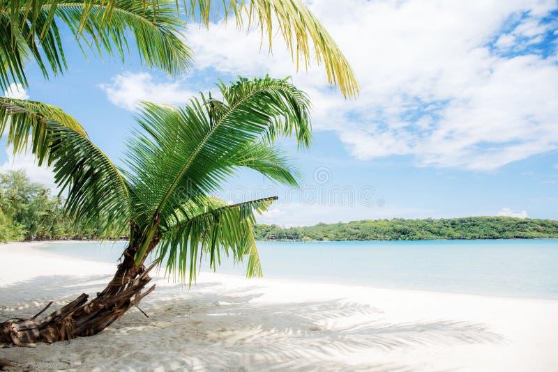 Palmblad p? sand arkivbilder