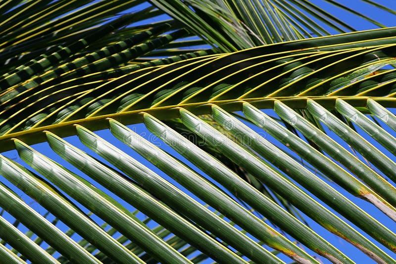 Palmblad sluit af met zonlicht dat erin reflecteert royalty-vrije stock afbeeldingen
