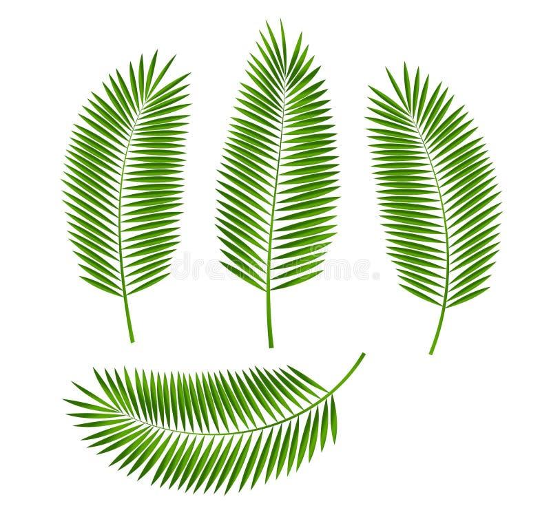 Palmblad Vectorillustratie royalty-vrije illustratie