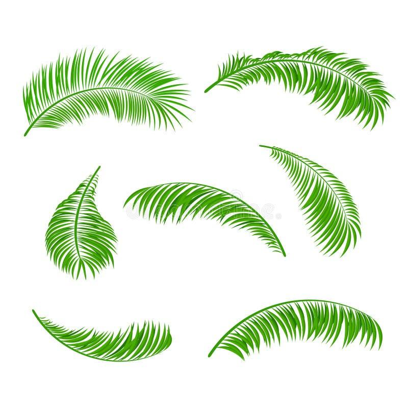 Palmbladen royalty-vrije illustratie