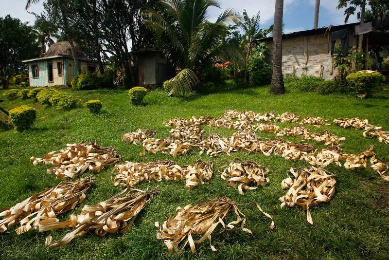 Palmbladen die in Navala-dorp, Viti Levu, Fiji drogen stock afbeeldingen