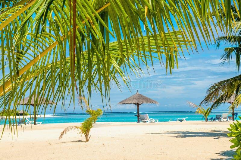 Palmbladen en een exotisch zandig strand stock fotografie