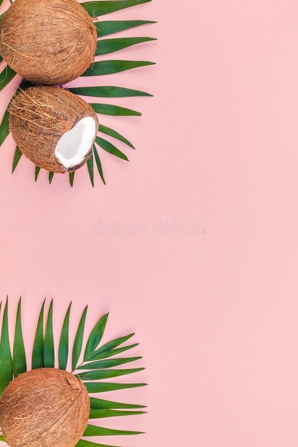 Palmbladen en kokosnoten op roze pastelkleurachtergrond stock fotografie