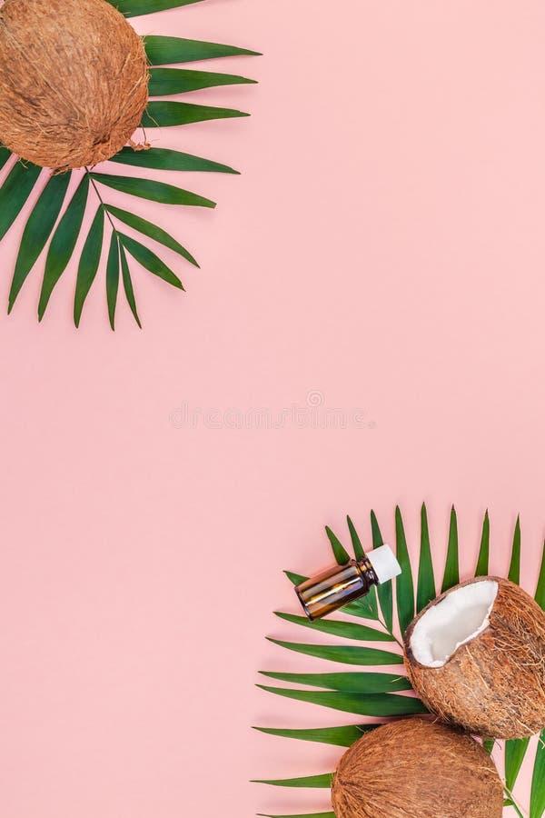 Palmbladen en kokosnoten op roze pastelkleurachtergrond stock foto