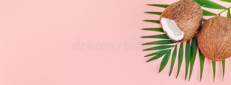 Palmbladen en kokosnoten op roze pastelkleurachtergrond royalty-vrije stock afbeelding