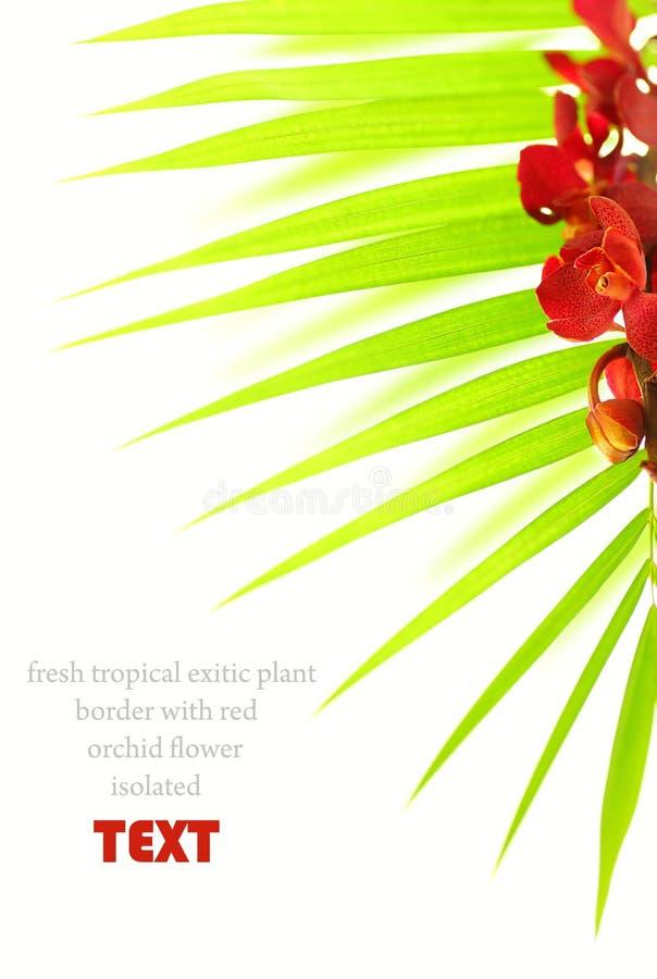 Palmbladen en rode orchidee stock afbeeldingen