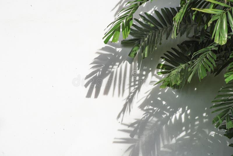 Palmbladen met schaduw op witte concrete achtergrond stock afbeeldingen