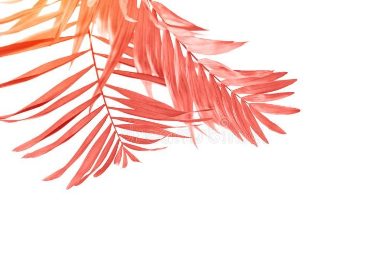 Palmbladen op witte achtergrond Het leven koraalkleur van het Jaar 2019 stock afbeeldingen