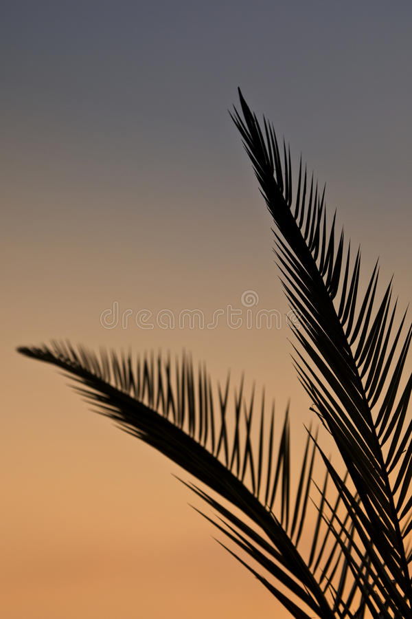 Palmbladen in silhouet stock afbeeldingen