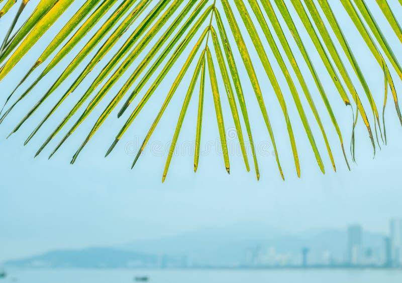 Palmbladen tegen de achtergrond van de stad royalty-vrije stock foto's