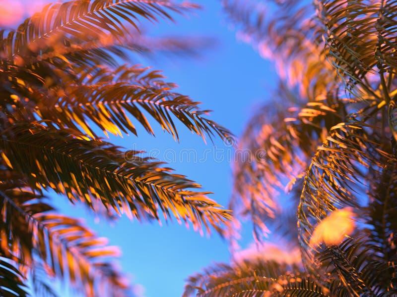 Palmbladen tegen de Hemel royalty-vrije stock afbeelding