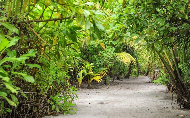 Palmbladen Tropisch Bos op het eiland in Indische Oceaan Mooi landschap van vochtige tropische wildernis Tropisch Bos royalty-vrije stock foto's