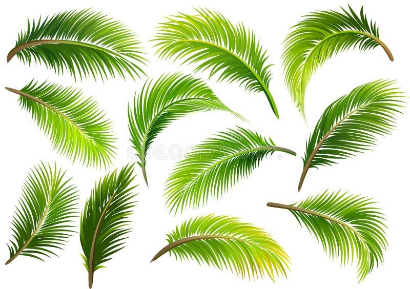 Palmbladen Vector royalty-vrije illustratie