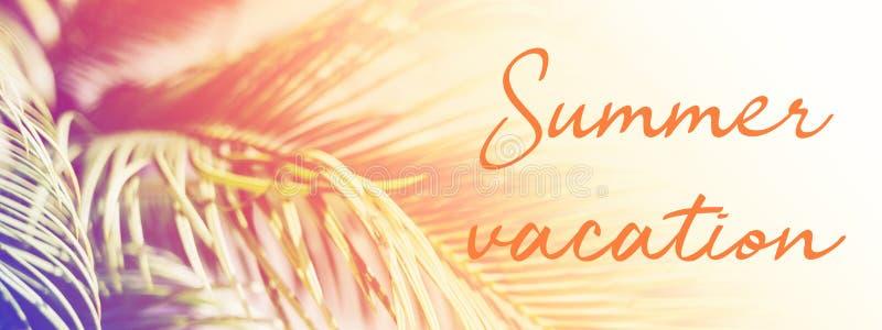 Palmbladen in zonlicht met de vakantie van de inschrijvingszomer stock foto's