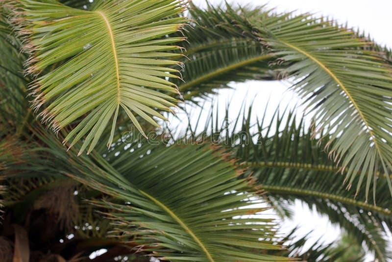 Palmbladeren stock afbeeldingen