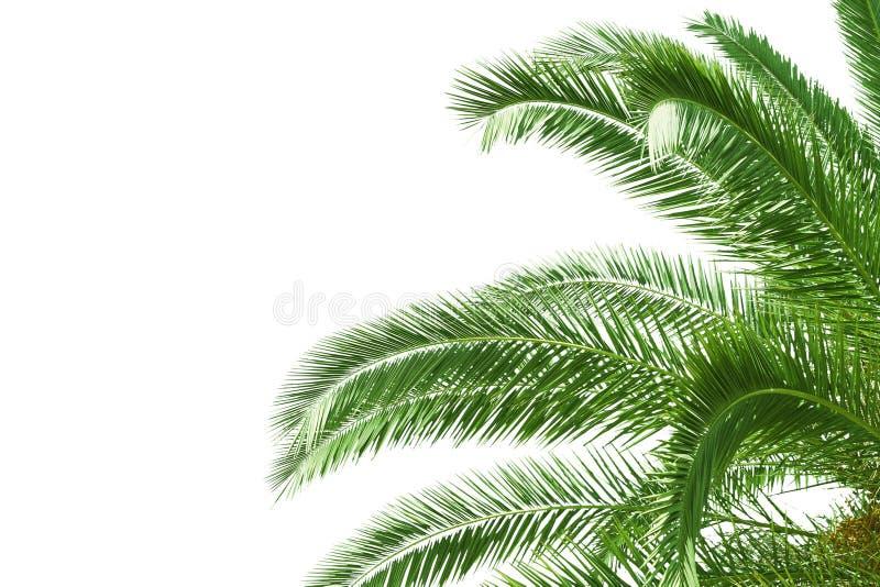 Palmbladeren royalty-vrije stock foto
