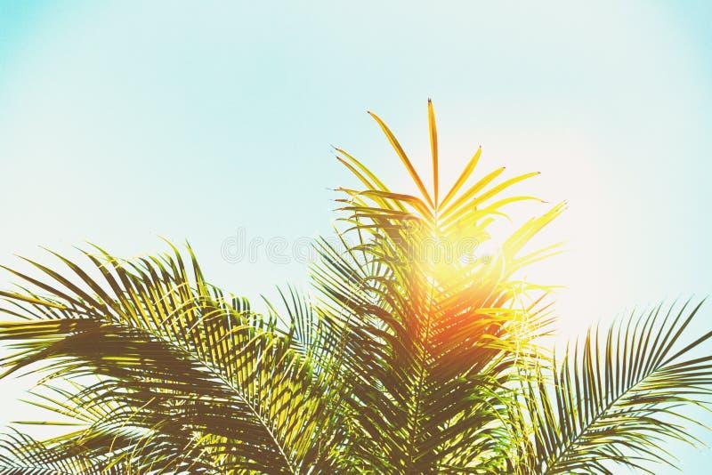 Palmbladeren royalty-vrije stock afbeelding