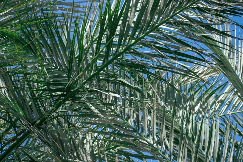 Palmbladeren met blauwe erachter hemel stock afbeeldingen