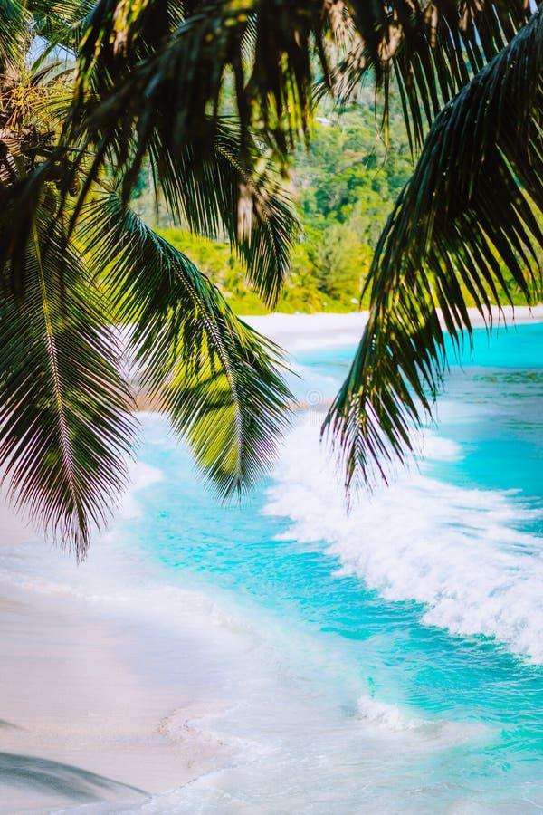 Palmbladeren op mooi tropisch intendance van paradijsanse strand Oceaangolfbroodje op zandig strand met kokospalm royalty-vrije stock foto's