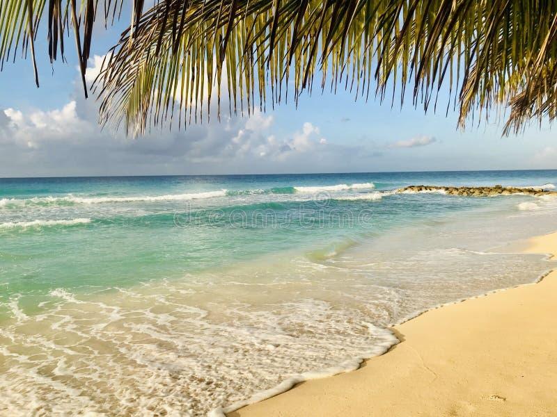 Palmbladeren over het strand van Dover royalty-vrije stock afbeeldingen