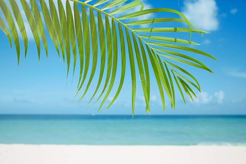 Palmbladet, det blåa havet och tropisk vit sand sätter på land arkivbild