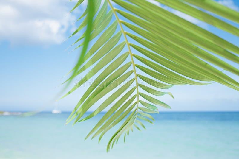 Palmbladet, det blåa havet och tropisk vit sand sätter på land royaltyfri bild
