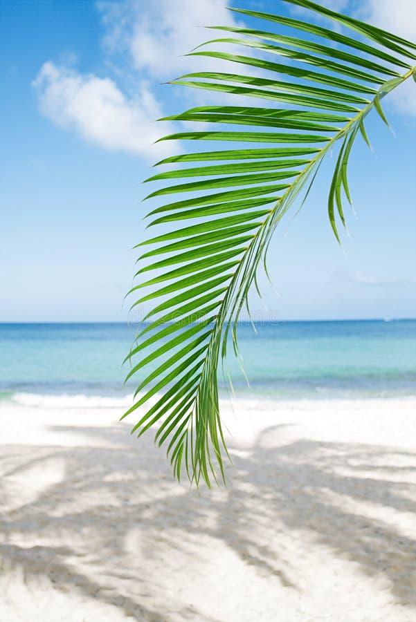Palmbladet, det blåa havet och tropisk vit sand sätter på land under solen arkivfoto