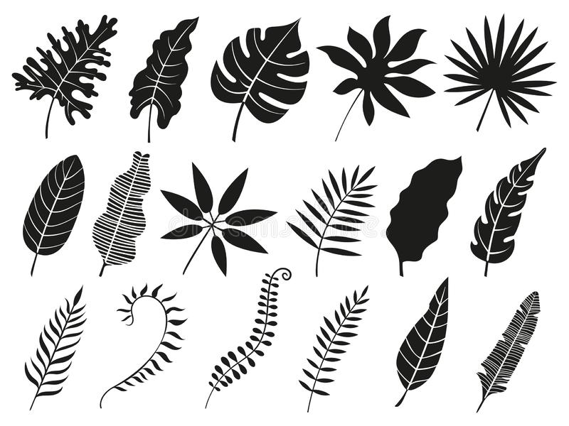 Palmbladkontur Den Monstera ormbunksbladet, växt lämnar konturer, och tropiskt gömma i handflatan den ormbunksblad isolerade vekt stock illustrationer