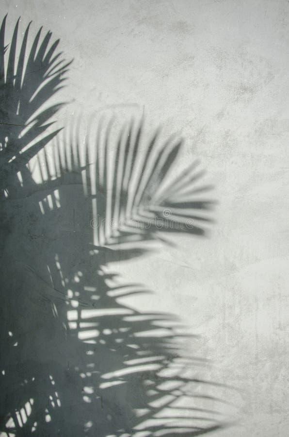 Palmbladschaduw op de muur stock foto