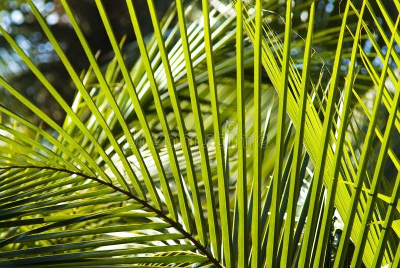Palmblathintergrund lizenzfreies stockbild