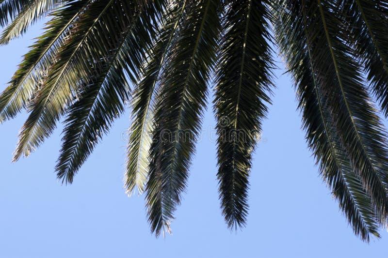 Palmblathintergrund stockfotos