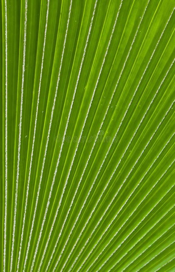 Download Palmblatmusterhintergrund stockbild. Bild von palme, umgebung - 27725557