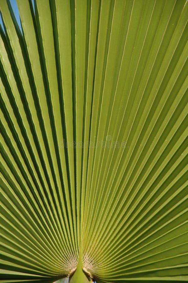 Palmblatt stockfotos