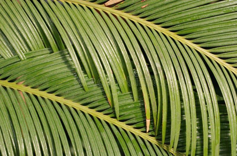 Palmblatt stockfotografie