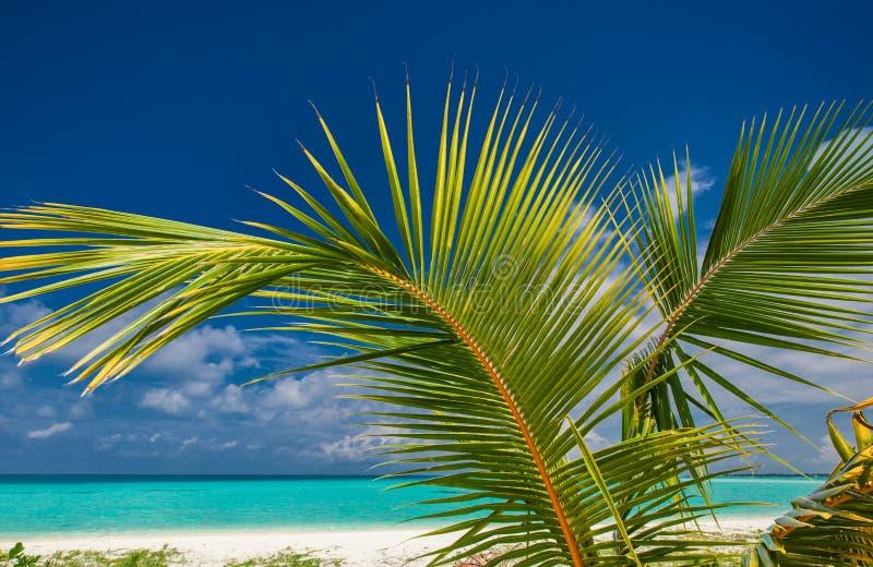 Palmblatt agains blauer Himmel mit Meer und tropischem Strand lizenzfreie stockfotografie